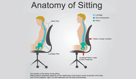 anatomy of sitting